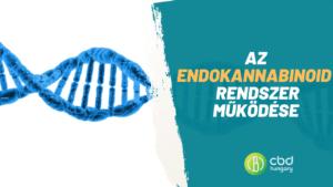 Az endokannabinoid rendszer jelentősége és a kannabinoid receptorok szerepe a szervezetben